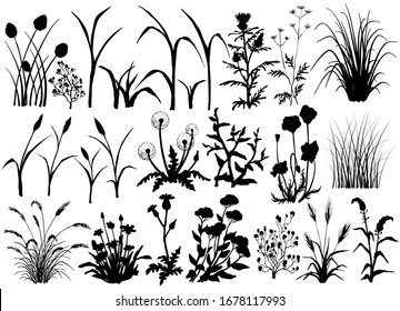 Silhouette of Field flowers and grass, butterfly, hand drawn vector illustration