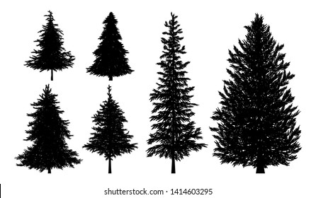 Silhouette of fir or pine trees on white background vector illustration
