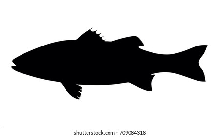 silhouette fish seabass on white background, vector illustration