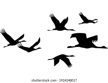 Silhouette of a flock of cranes in flight on a transparent background.