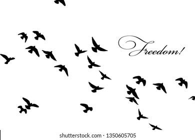 silhouette of a flock of flying birds. Freedom!