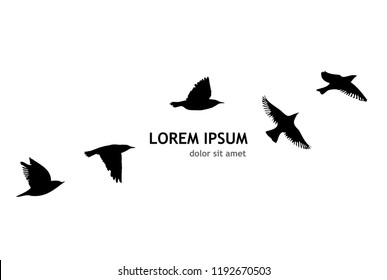 Silhouette of a flock of flying birds. Vector