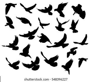 silhouette flocks of flying pigeons,set