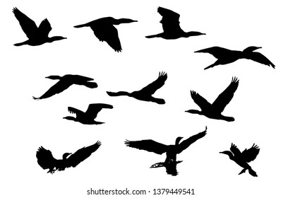 silhouette of flying birds on white background with 11 different types