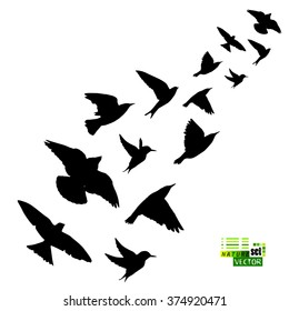 Silhouette flying birds. Vector