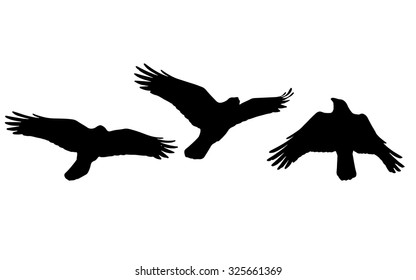 Silhouette of  Flying Crow in Three Positions