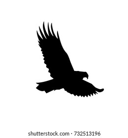 Silhouette of flying eagle.