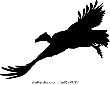 Silhouette of a flying Griffon vulture bird, scientifically known as Gyps fulvus. Vector illustration.