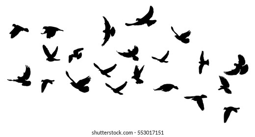 silhouette flying pigeons