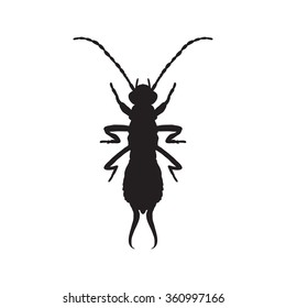 silhouette Forficula auricularia. Earwig silhouette. Sketch of Earwig. Earwig silhouette isolated on white background.  hand-drawn  Earwig silhouette. Vector illustration