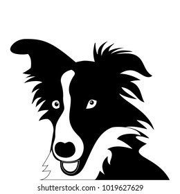 Silhouette of funny playful little black and white puppy border collie. The dog stands and raised his ears. herding dog