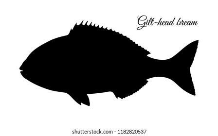 Silhouette of gilt-head sea bream. Hand drawn vector illustration of fish on old paper background.