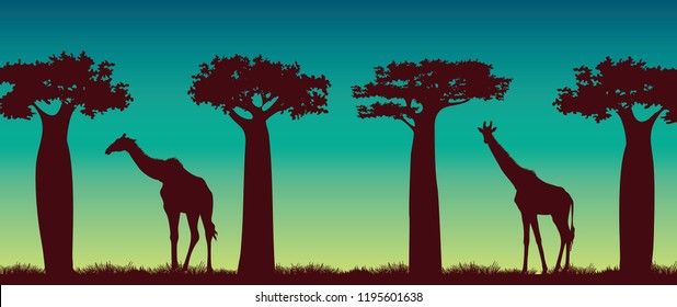 Silhouette of giraffs and baobabs on a night sky background. African vector landscape. Animal wildlife illustration.