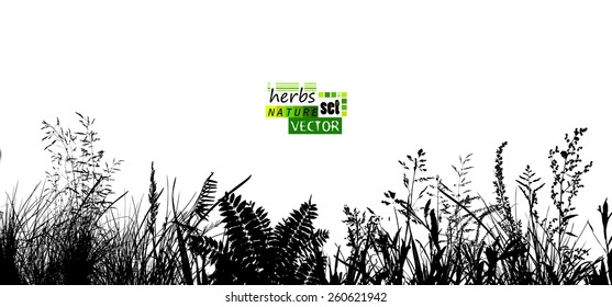 Silhouette of grass meadow. Background grass silhouette. Vector