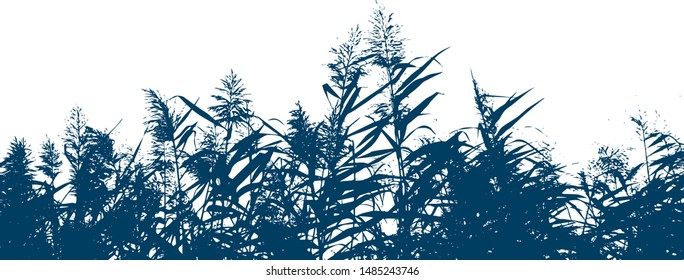 Silhouette of grass sow thistle. Blooming reeds. Lake grass. Group of plants. Close-up. Isolated vector illustration. Black on white.