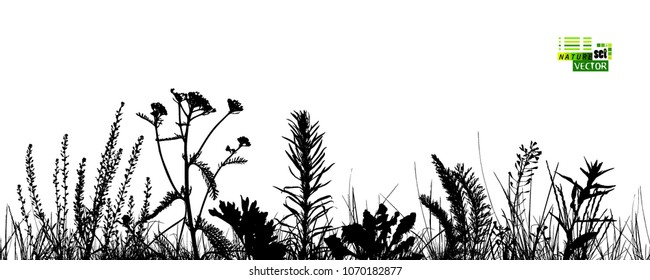 Silhouette of grass. Vector