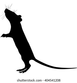 Silhouette of a gray rat