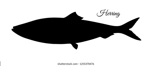 Silhouette of herring. Hand drawn vector illustration of fish isolated on white background.
