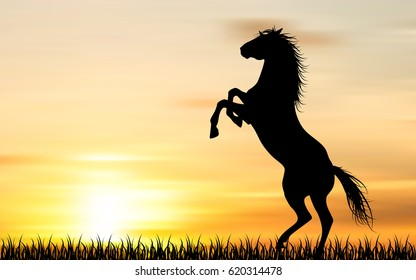 Silhouette of a horse on sunset background