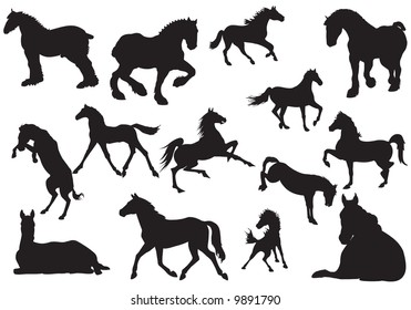 Silhouette of horse, vector, illustration