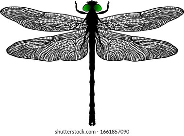 Silhouette icon of a Dragonfly insect scientifically known as Anisoptera, spreading its wing. Vector illustration.