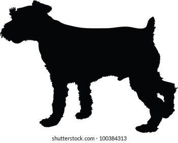 A silhouette image of a standing male Schnauzer dog.