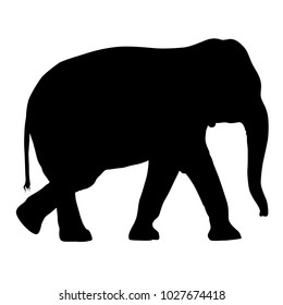 Silhouette large African elephant on a white background.