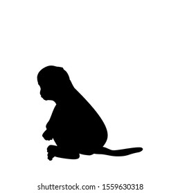 Silhouette of little Monkey. Cute young animal. Vector illustrator