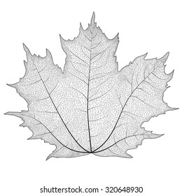 Silhouette maple leaf with veins on it.