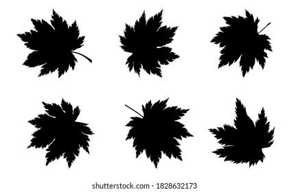 silhouette of maple leaves set. Eps10 vector illustration.