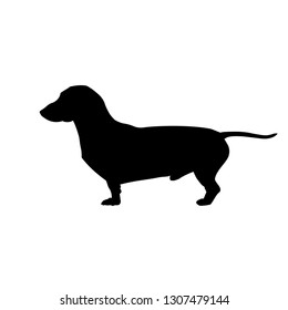 Silhouette of miniature dachshund. Vector illustration isolated on white background