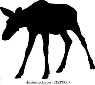 Silhouette of Moose calf