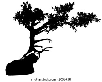 Silhouette of an Old Tree