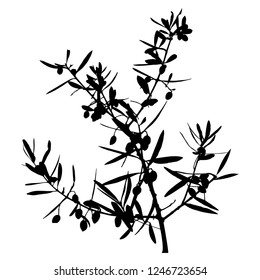 Silhouette of olive branches with leaves and berries. Vector illustration. Close-up. Isolated background. Olives on the branch. Black colour. Harvest olives. Hanukkah. A branch of olive tree. Elegant