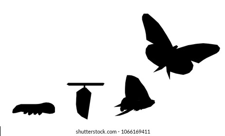 Silhouette on isolated white background of beautiful abstract digital Business transformation innovation. Changing like butterfly life cycle. Present professional success future growth concept