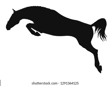 Silhouette of a perfect jumping young horse.