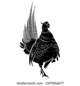 Silhouette of a Pheasant (Phasianus colchicus). Graphic drawing. Vector.