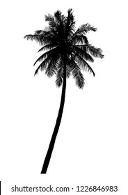silhouette of realistic coconut tree, natural palm illustration, vector summer sign