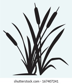 Silhouette reed isolated on white background