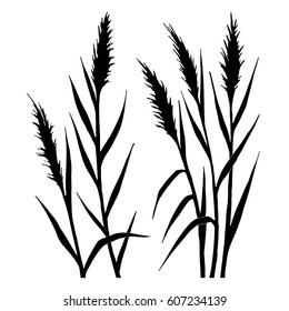 Silhouette of the reed on a white background. All plants are separated. Vector illustration.