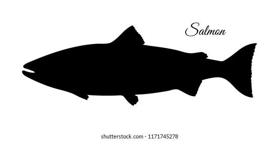 Silhouette of salmon. Hand drawn vector illustration of fish isolated on white background. Retro style.