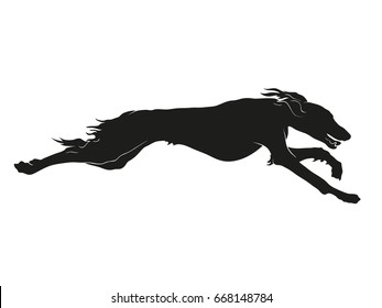 Silhouette of Saluki sighthound running