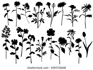 Silhouette spring and summer forest and garden wild flowers isolated on white Vector illustration of the nature of the flower in spring and summer in the garden, dandelion, chamomile, black