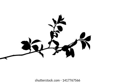 Silhouette of spring twig with pointed leaves isolated on white, vector illustration
