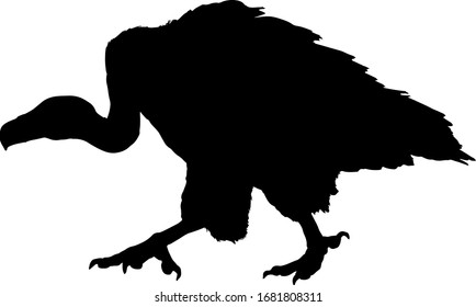 Silhouette of a stalking Griffon vulture bird, scientifically known as Gyps fulvus. Vector illustration.