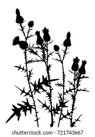Silhouette of a thistle bush. Vector illustration.