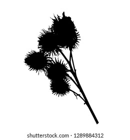 Silhouette of a thistle plant. Vector isolated illustration. Black color. Thistle branch with seeds. Isolated background.
