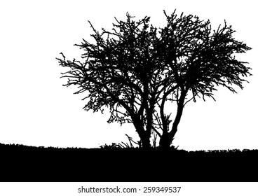 Silhouette of tree - bush with bare branches - winter scenery - landscape and black space for text - isolated - vector