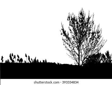 Silhouette of tree, bush with bare branches. Winter scenery trees from a far landscape and black space for text vector