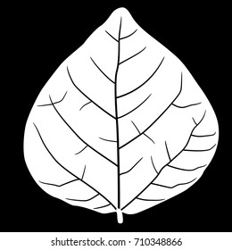 Silhouette of a tree leaf with veins. Isolated white silhouette on black background. Element for design, print, emblem, stencil or logo.
